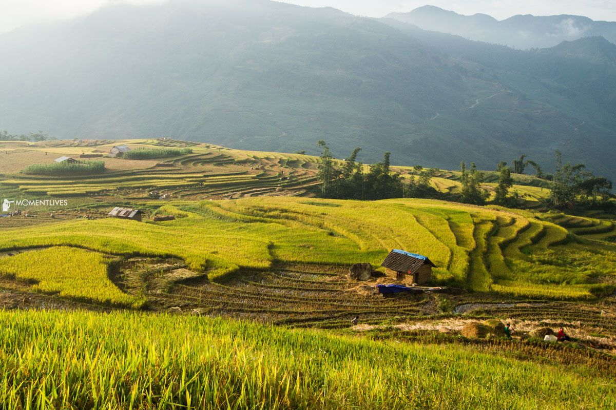 A house in the rice terraces