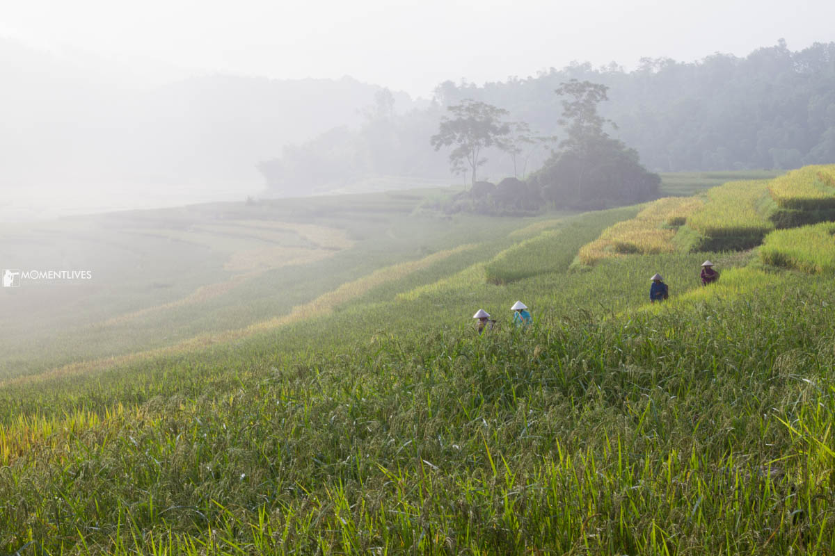 Photo tour to Pu Luong and see the rice field