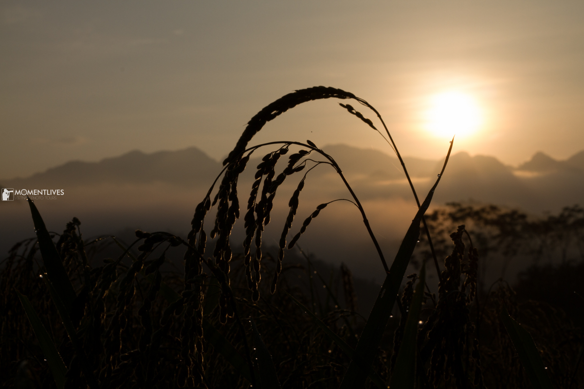 Photo tour to capture the rice field beauty