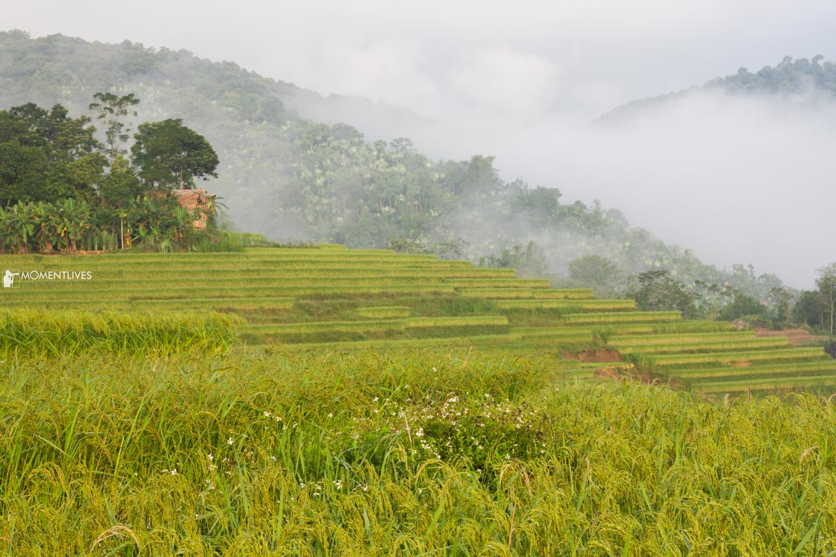 Photo tour to the rice terraces of Pu Luong