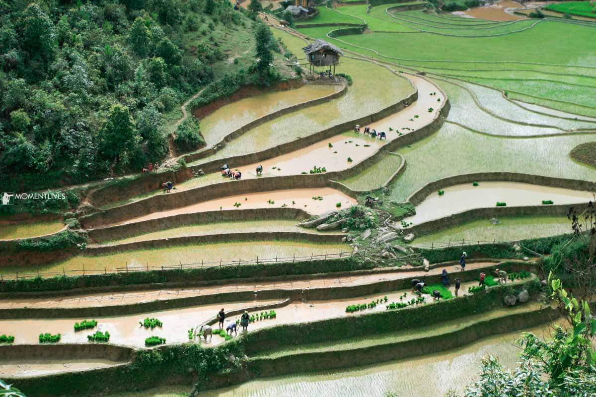 The-rice-photo-tours
